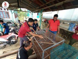 Warga Mangkirana Serahkan Owa Jenggot-putih ke BKSDA Kalimantan Selatan