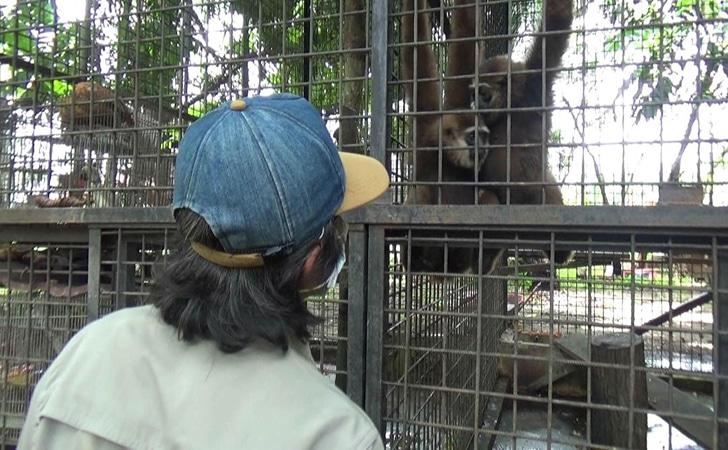 Pelihara Owa Ungko, Diserahkan Warga Ke BBKSDA Riau